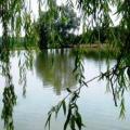le lac.JPG