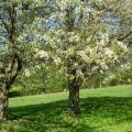 pique-nique sous les pommiers en fleurs.JPG