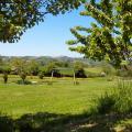 view-garden-swing.jpg